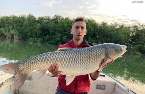 Borsi Sándor - Amur 18 kg - 2021. 07. 23 - Harcsás